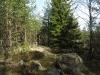 13-skogsglanta