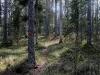 16-oppen-storskog