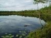 32-bastusjon-fisketavl