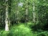 26-storre-lovskog-x