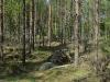 8-skog
