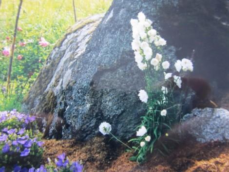 vit storklocka